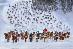 PSA Gold Medal - Yuk Fung Garius Hung (Hong Kong)  Snow Horses 1