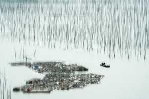 PhotoVivo Gold Medal - Min Li (China)  Fishing 5