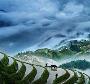 APAS Honor Mention e-certificate - Jixin Zhang (China)  Morning Tillage