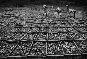 PhotoVivo Honor Mention E-Certificate - Yuk Fung Garius Hung (Hong Kong)  Sun Dried Fish