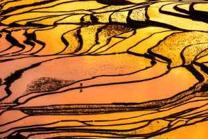 Circuit Merit Award e-certificate - Xuan Tang (China)  Golden Light