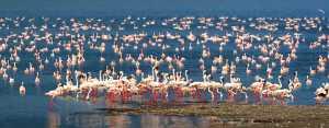 PhotoVivo Gold Medal - Shenyan Tan (China)  Flamingo Heaven