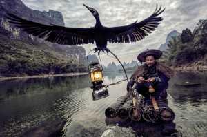ICPE Honor Mention e-certificate - Pedro Luis Ajuriaguerra Saiz (Spain)  The Splendor Of The Cormorant