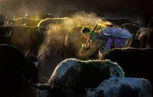 PhotoVivo Honor Mention e-certificate - Risheng Liu (China)  Morning Pasture