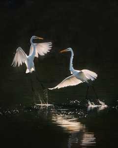 PhotoVivo Gold Medal - Philip Chan (Canada)  Aerial Dance