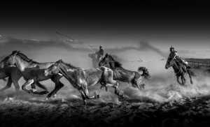 APU Gold Medal - Fang Shang (China)  Horse Race