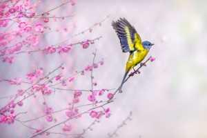 APAS Gold Medal - Jinquan Tao (China)  Spread Wings