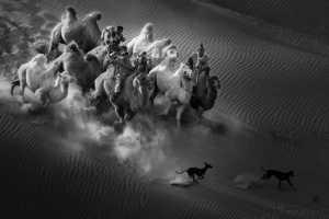APAS Gold Medal - Xiping An (China)  Camel Dog1