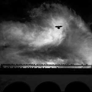 PhotoVivo Gold Medal - Huijun Liang (China)  Fly Over