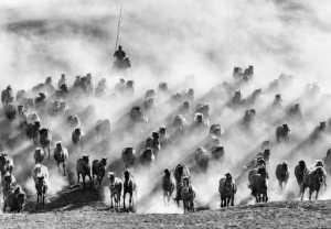 APAS Gold Medal - Lianjun Quan (China)  Galloping Horses 5