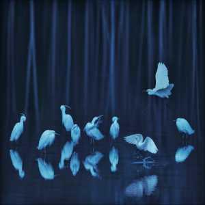 APU Gold Medal - Jianjun Huang (China)  Egrets