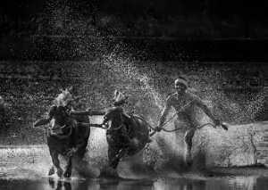 PhotoVivo Gold Medal - Jinesh Prasad (India)  Vandaru Kambala  Bw