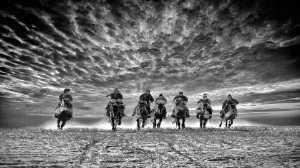 PhotoVivo Gold Medal - Hugo Chan (USA)  Gallant Horses