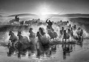 PhotoVivo Gold Medal - Yuk Fung Garius Hung (Hong Kong)  Running Horses 3