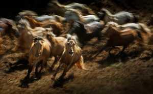 Circuit Merit Award e-certificate - Ping Liu (China)  Good Foal