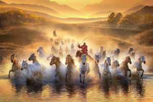 MPSA Gold Medal - Yuk Fung Garius Hung (Hong Kong)  Running Horses 1