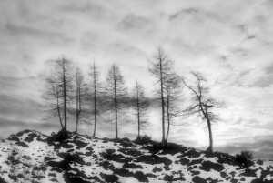 APAS Honor Mention e-certificate - Lajos Nagy (Romania)  Cold Landscape