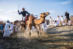 APU Gold Medal - Hussain Al-Qwaidhi (Saudi Arabia)  Oman Camel Racing