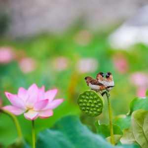 PhotoVivo Gold Medal - Liying Wu (China)  Meeting In The Lotus Pond