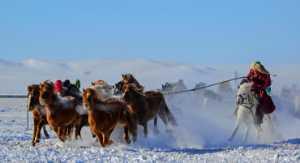 APU Honor Mention e-certificate - Jiakai Gong (China)  Winter Horses Herd
