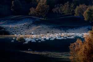 ICPE Honor Mention e-certificate - Jiangchuan Tong (China)  Sheep Back