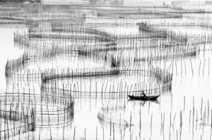 RPST Bronze Medal - Guangyao Chen (China)  Purse-Seining Fishing
