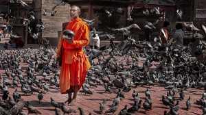 Circuit Merit Award e-certificate - Jin Huat Yeoh (Malaysia)  Monk and Pigeons