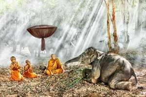 PhotoVivo Gold Medal - Say Boon Foo (Malaysia)  Monks Prayer With Elephant 2