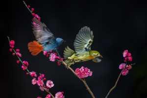 PhotoVivo Gold Medal - Yakang Ai (China)  Do Not Leave