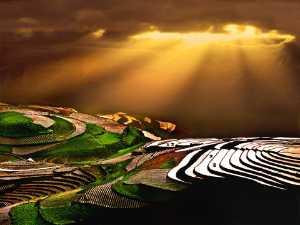 PhotoVivo Gold Medal - Tong Hu (China)  Gold Sprinked Wart