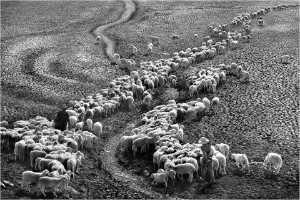 PhotoVivo Gold Medal - Truong Huu Hung (Vietnam)  4- Drought