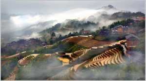 APAS Gold Medal - Thong Tran (USA)  Terrace 3