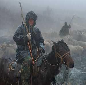 PhotoVivo Honor Mention e-certificate - Peide Yuan (China)  Against Wind And Rain