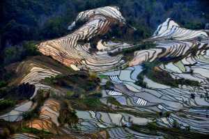 PhotoVivo Gold Medal - Liumei Xiao (China)  Yuan Yang Terraces5