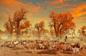 ICPE Honor Mention e-certificate - Yanbin Wang (China)  Autumn Pasture