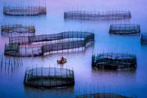 PhotoVivo Gold Medal - Liquan Sheng (China)  Purse Seiner