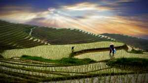 PSA Gold Medal - Hugo Chan (USA)  Terraced Fields