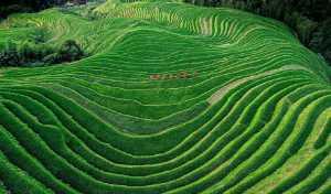 PhotoVivo Honor Mention e-certificate - Chaohong Wang (China)  Terraced Fields Of Yao