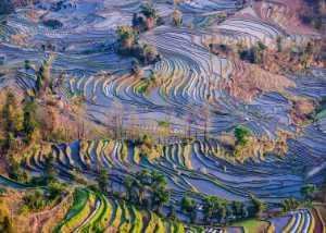 ICPE Gold Medal - Qun Gu (China)  Terrace