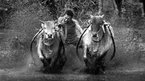 PhotoVivo Honor Mention e-certificate - Udaya Thejaswi Urs (India)  Dhono Bhago Jaldi