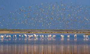 PhotoVivo Honor Mention e-certificate - Shehan Trek (Sri Lanka)  Feathery Flock 2