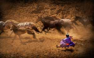 Circuit Merit Award e-certificate - Mingqin Yin (China)  Lasso A Horse