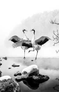 APAS Honor Mention e-certificate - Jianguo Wang (China)  Love In Swan Lake
