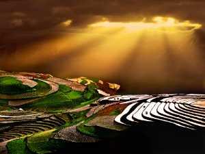 APAS Gold Medal - Tong Hu (China)  Gold Sprinked Wart