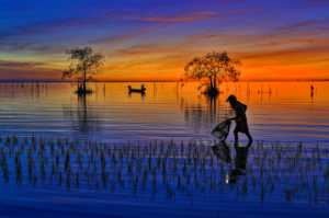 APU Gold Medal - Waranun Chutchawantipakorn (Thailand)  3-Morning Catch
