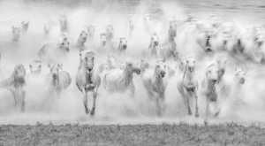 PhotoVivo Gold Medal - Jing Li (China)  Gallop Horse 3