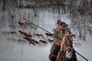 PSM Gold Medal - Weibing Zhou (China)  Horse Herder