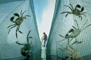 APU Honor Mention e-certificate - Jisheng Sun (China)  Catching Crabs