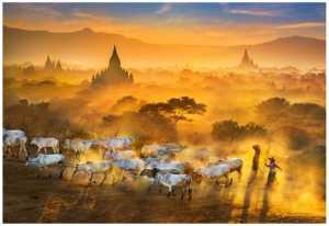 PhotoVivo Gold Medal - Wendy Wai Man Lam (Hong Kong)  Sunset Go Home 2