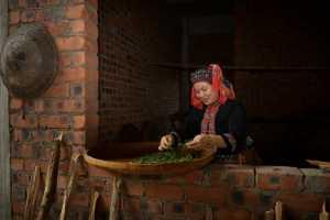 PhotoVivo Gold Medal - Shubin Qing (China)  Tea Rhyme Of Yao Village 3